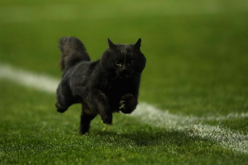 Black Cat Day Here Are 11 Cute Pictures Of Cats Talkradio