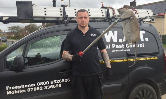 Pest Controller Jeff Sullivan exterminated a rat measuring two feet