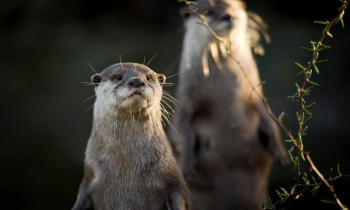 The Tamar Otter sanctuary - North Petherwin, Cornwall