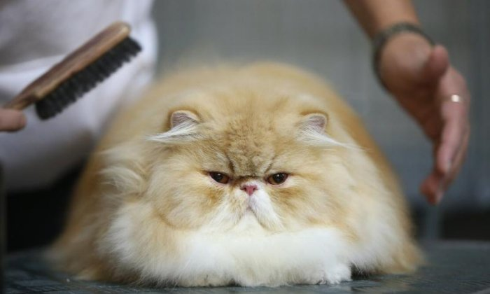 1. There are more than 500 million domestic cats in the world