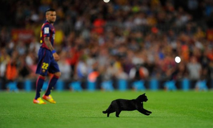 12. The top speed of a cat is about 31 mph, over short distances
