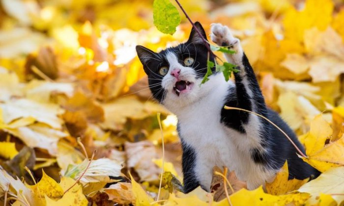 3. Adult cats 'meow' to communicate with humans, not each other