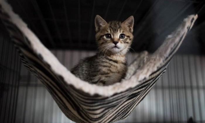 8. Cats can hear sounds as high as 64kHz. Us mere humans can hear only as high as 20kHz