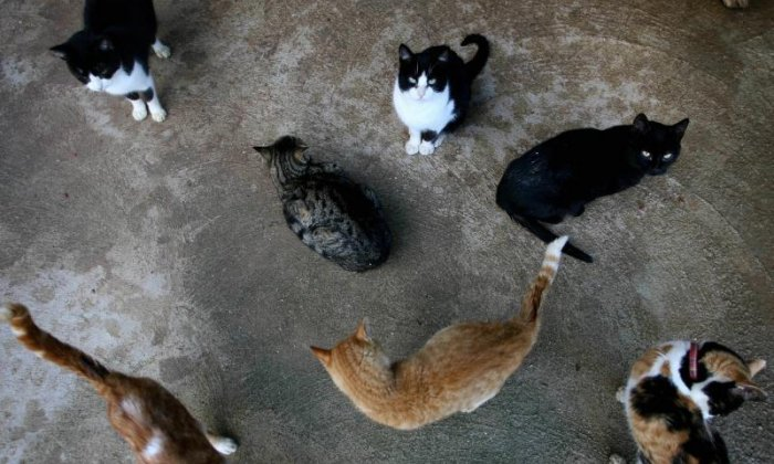 4. A group of cats is called a clowder