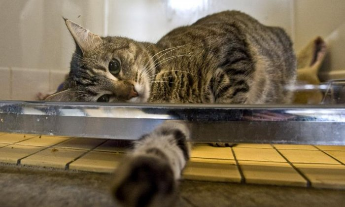 13. Experts think cats know their way home from the angle of the sunlight, or magnetised cells in their brains, which act like a compass