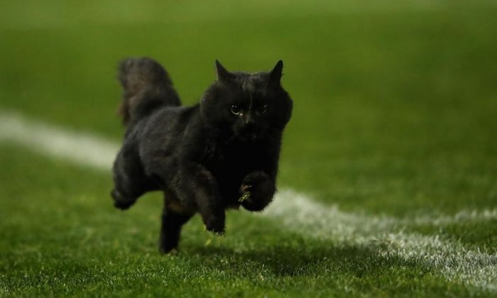 'They're not witches or bad luck' - Twitter celebrates Black Cat Day
