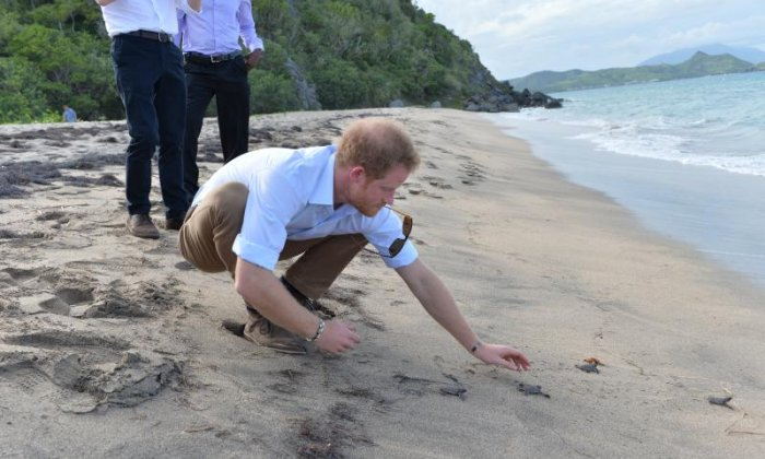 The day Prince Harry released turtles into the sea - Jon Holmes talks to the talkRADIO turtle correspondent