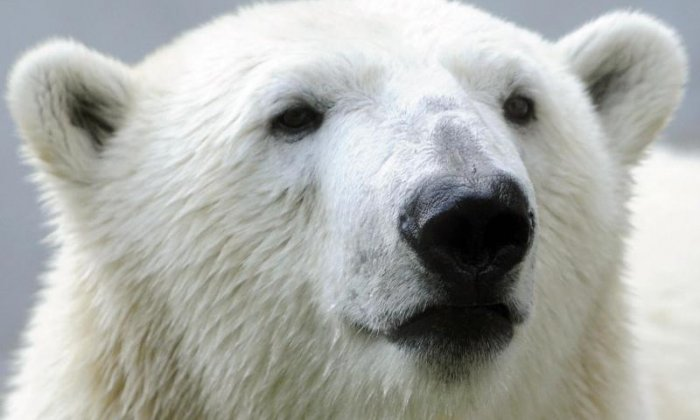 WATCH Polar bear finds a pet dog and starts stroking it