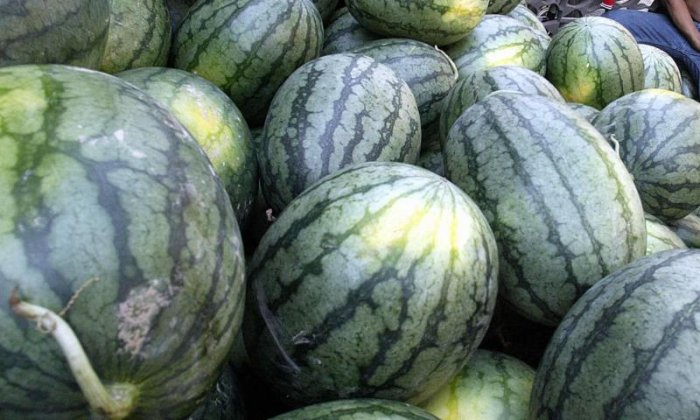 More than 1,000kg of marijuana disguised as watermelons is found in Texas