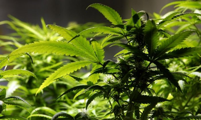 Six arrested after large cannabis factory is discovered in former nuclear bunker