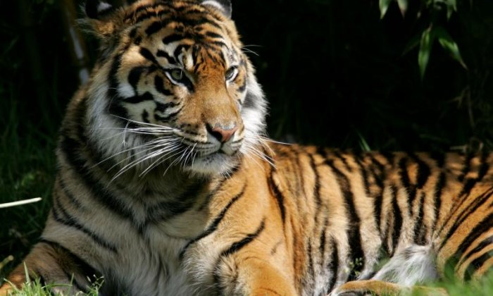 'I'm glad I never visited' - Campaigners celebrate as South Lakes Safari Zoo is refused licence
