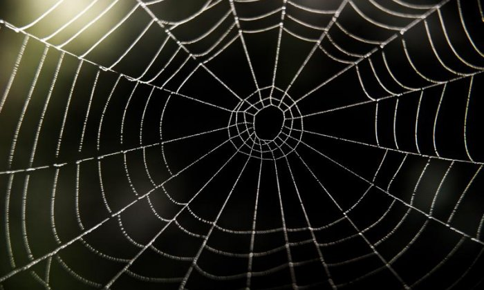 The Big Debate on cobwebs: 'Can you make sure the producer has his hand on the profanity buzzer?'