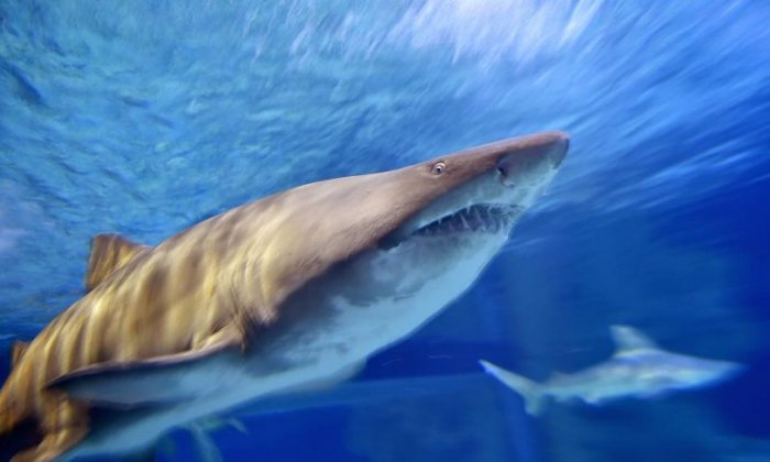 Shark Attack in Miami Injures Swimmer Exiting Water