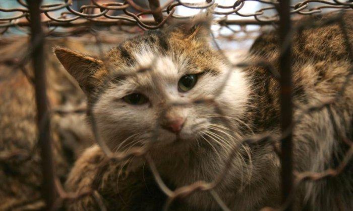 Woman dies after contracting virus from stray cat bite in Japan