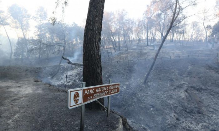 Vegetation has been destroyed by fire in Carros near Nice