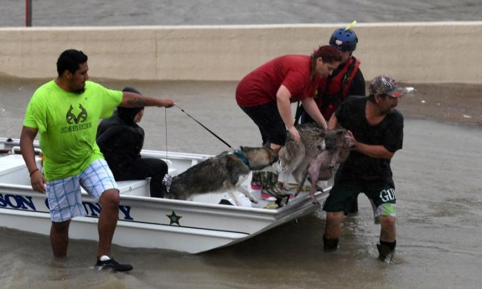 A Sheriff's boat takes dogs to safety