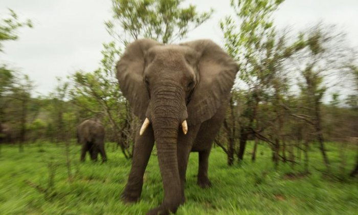 Nine elephants in Botswana die after being electrocuted by a power line