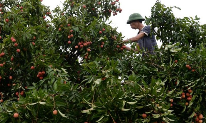 Modern slavery: Fruit pickers in Australia 'brainwashed with religion', says undercover journalist