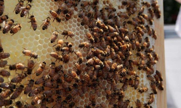 The Big Debate on beehives: 'Polish worker bees build beehives cheaper than English worker bees'