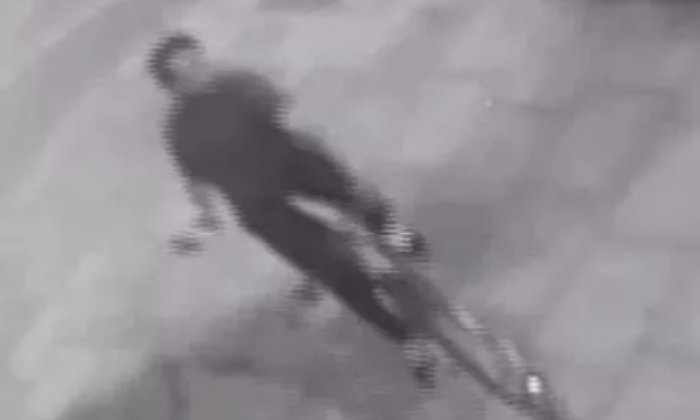 Police hunt cyclist who knocked man unconscious and broke woman's nose