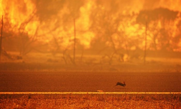 Man braves California wildfire to save rabbit from catastrophe