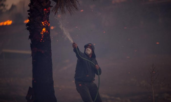 A resident is seen hosing down a burning palm tree