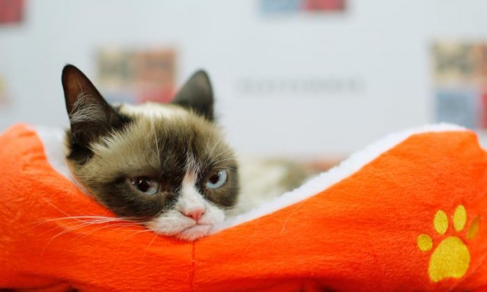 Grumpy Cat wins more than £400,000 in lawsuit