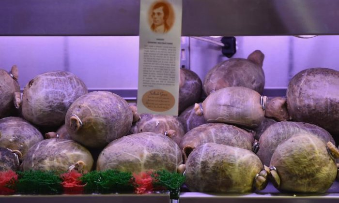 Burns Night: Scottish celebrations scuppered in America as haggis is still banned
