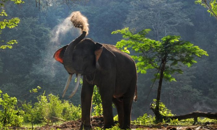 Elephant crosses China-Laos border during early morning stroll