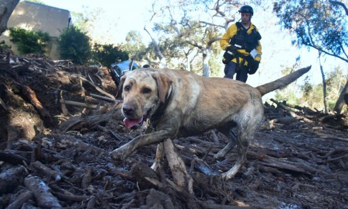 Search dogs have also been used following mudslides