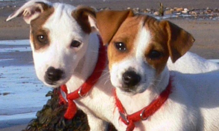 National Puppy Day: Two stolen puppies finally returned home