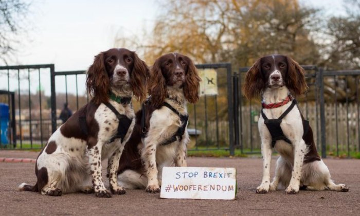Dogs and their owners are set to march to Parliament to demand a new Brexit referendum