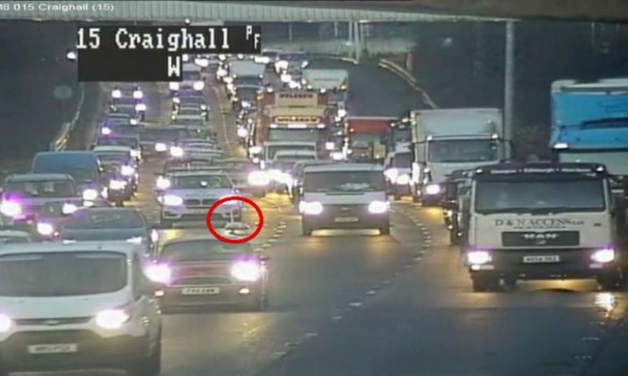 Swan 'just chillin' on motorway causes rush hour delays
