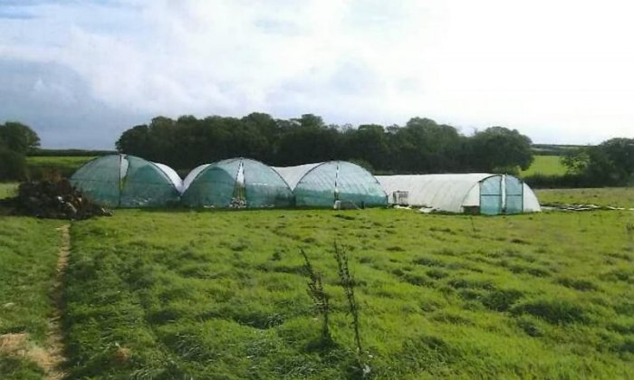 Pensioner among cannabis growers busted for £720,000 cannabis farm