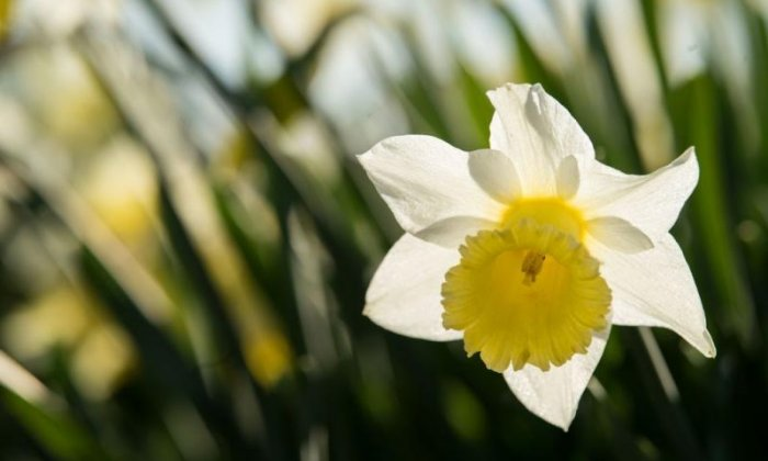 Daffodil farmer says eastern European workers saved his business