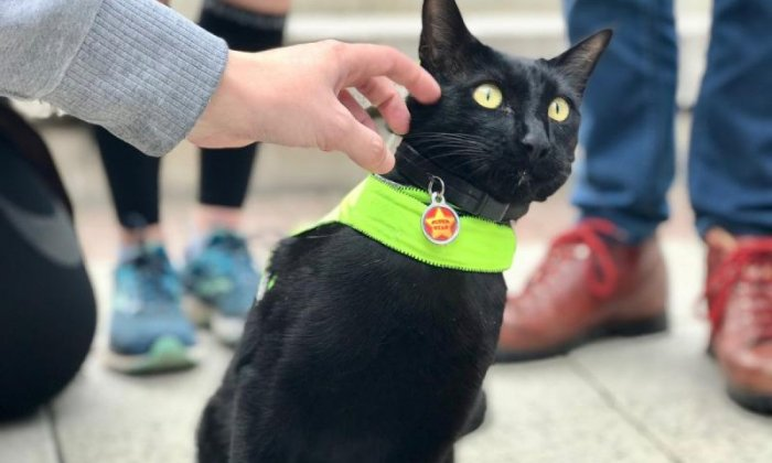 University's campus cat given high-vis jacket after being hit by van