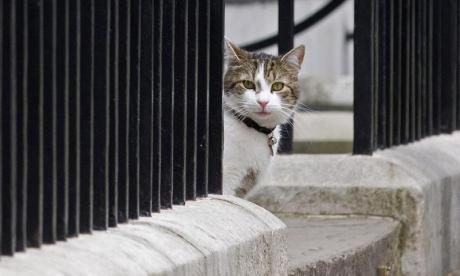 No. 10's cat, ex-wives and maths! It's Jon Holmes' Diversity Paper Review