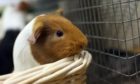 Bananas, fleas, and inflated guinea pigs: Lonely Lunch Club takes to the skies