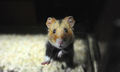 'Running hamsters could have created energy instead of nuclear power' - Find out more about Hinkley Power Plant