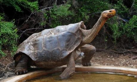 Expert praises tortoise who single-handedly saved species from extinction