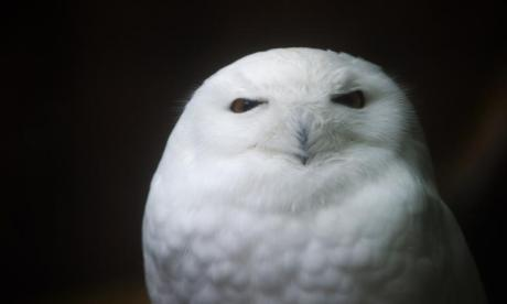 The Big Debate on Age: 'Owls are timeless'