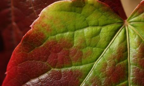 The Big Debate on leaves: 'Leaves are nature's toilet paper'