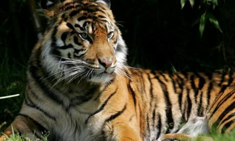 Tiger attacks trainer and is beaten with a stick, as the public looks on in Florida
