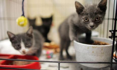 National Black Cat Day: Three kittens rescued from a bin bag left on the side of a road