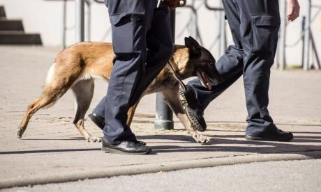 Alleged thief bites a police dog in an attempt to fend her off