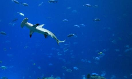 Man faces charges for allegedly punching a shark in the stomach