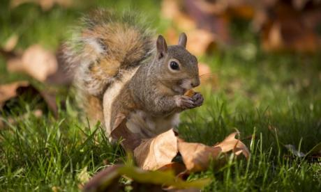 WATCH 'Bulb bandit' squirrel steals 150 light bulbs in 24 hours
