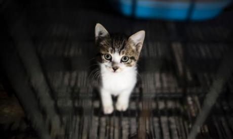 WATCH Kitten survives after running out on to busy road