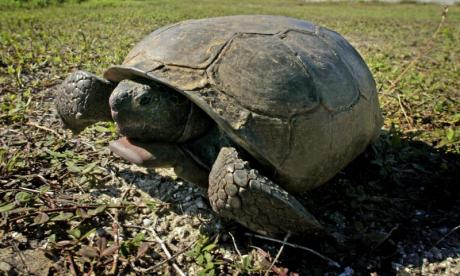 Florida wildlife officials rescue tortoise which has been spray-painted blue