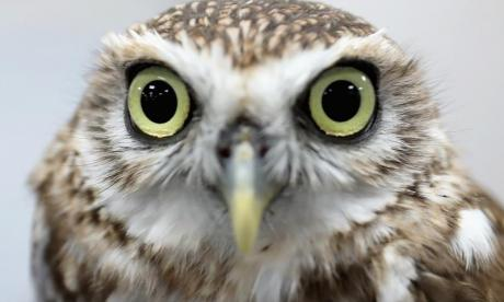 The Big Debate on owls: 'If a owl eats a brown mouse, will that a owl get a owl cancer?'